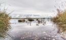 Saltmarsh Reflection 2 by carper123