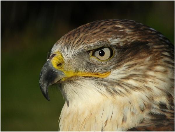 Eye and Beak by johnriley1uk