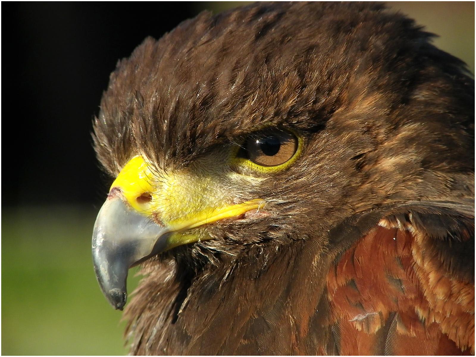 Eye and Beak 2