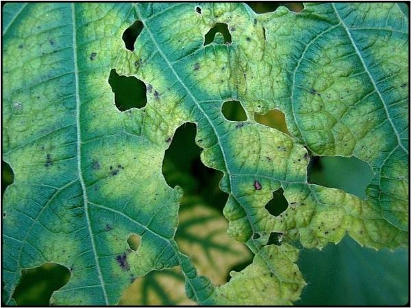 green leaves by FabioKeiner