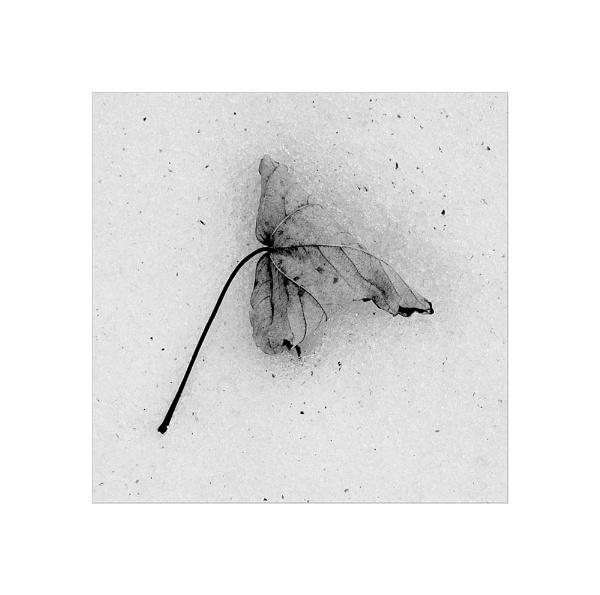 Leaf Study IIIa by whatriveristhis