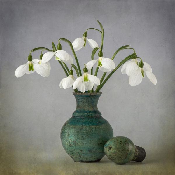 Galanthus Elwesii 2 by flowerpower59