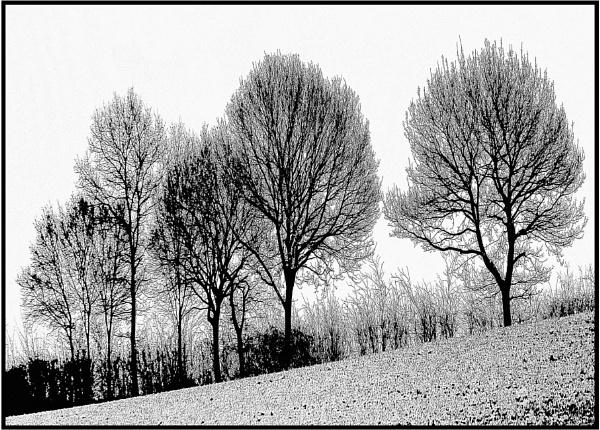 nine trunks... by estonian