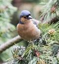 Bird by danbrann