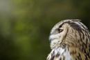 owlette by annaliese