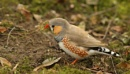 Zebra Finch by bobpaige1