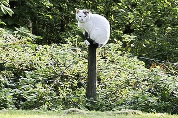 grumpy Polecat  !
