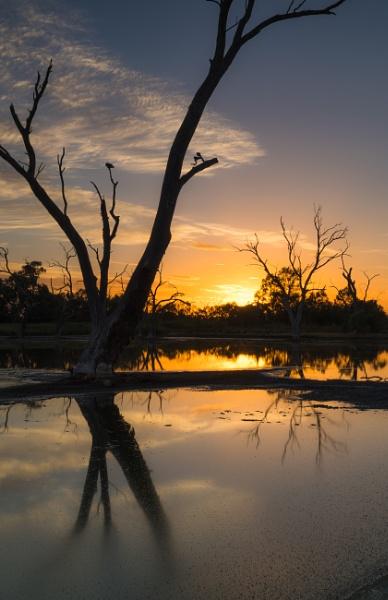 Early Birds, Tiger Bay Wetlands, Warren, New South Wales