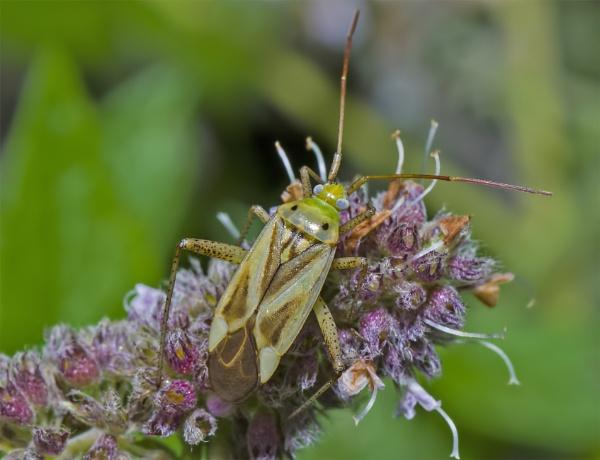 bug by robert61