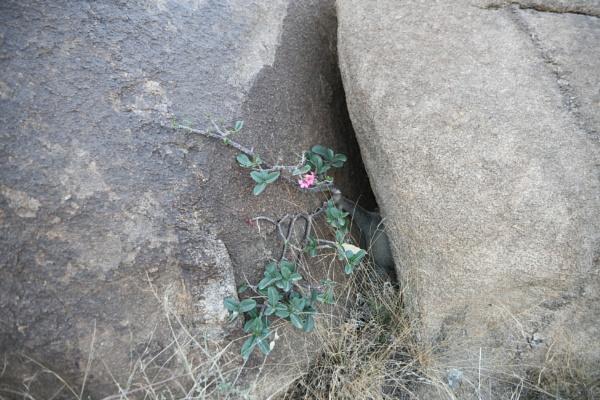 Flower & Rocks by faisalzeben