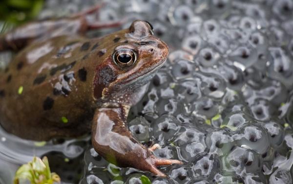 Frog March by SocksAndStuff