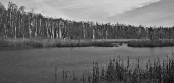 POLAND - Nature\'s Impressions No.19 by PentaxBro