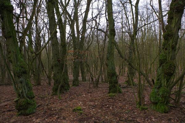 POLAND - Nature\'s Impressions No.13 by PentaxBro
