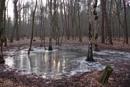 POLAND - Nature's Impressions No.9 by PentaxBro