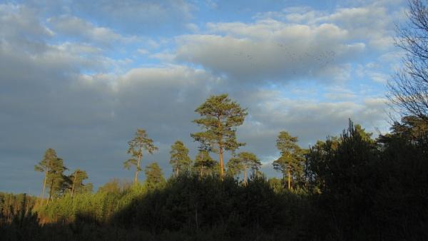 POLAND - Nature\'s Impressions No.20 by PentaxBro