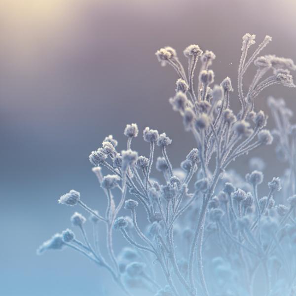 ...winter by KristinaZvinakeviciute