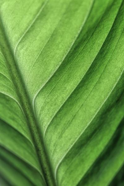 Leafy by sjr