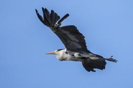 Photo : I Still Fly