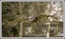 Milky Owl by Maiwand