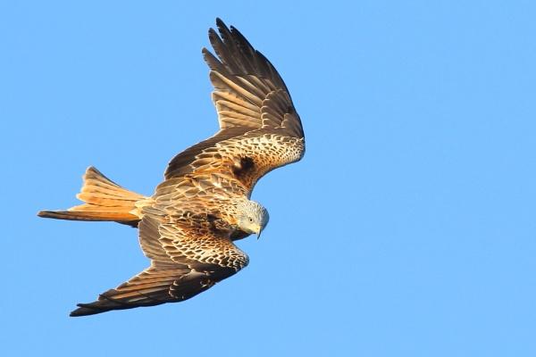 Kite Flight by TerryMcK
