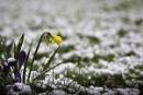 Where is spring? by JackAllTog