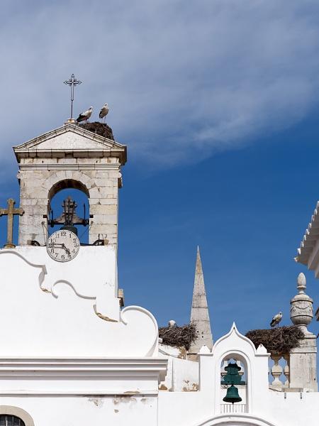 FARO, SOUTHERN ALGARVE/PORTUGAL - MARCH 7 : Storks  at Faro in P
