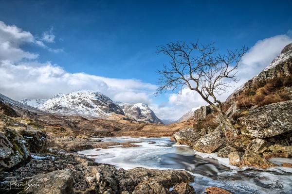Lone Tree Glencoe - Scotland