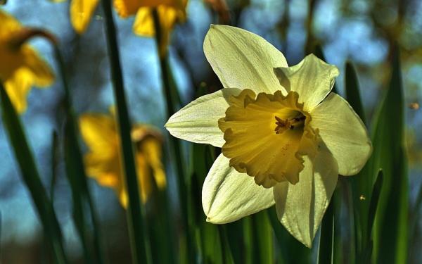 Spring image by georgiepoolie