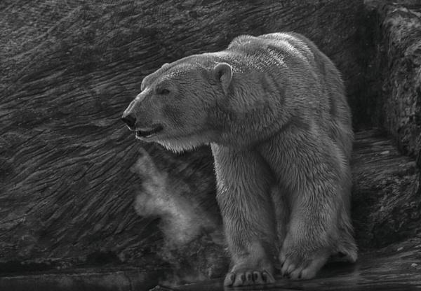Polar Bear by HelenaJ