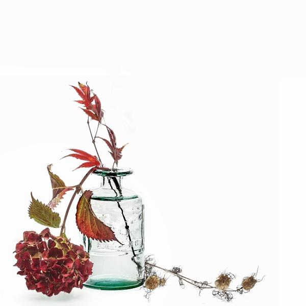 Hydrangea by deavilin