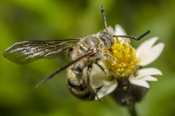 Bee on the job by kanwarmunish