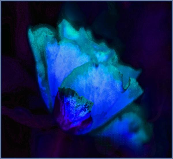 bluerose...
