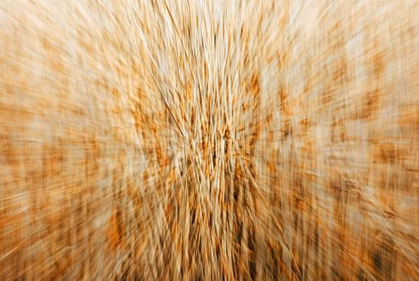 Looking at reeds