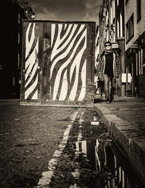zebra by mogobiker