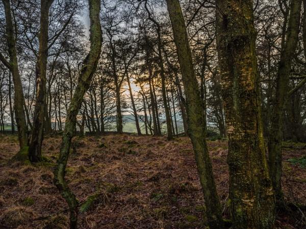 Through the Trees, by Skyerocket