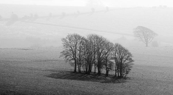 trees by alfpics