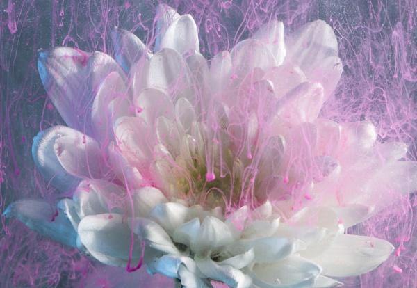 Underwater flower. by suzygee