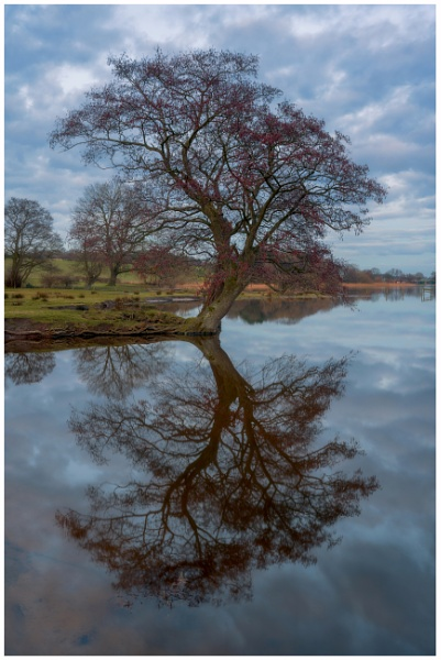 Budworth Reflection. by Satlight