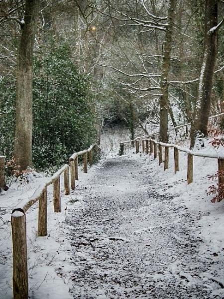 Snowy path by KrazyKA