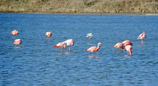Flamingos by joop_