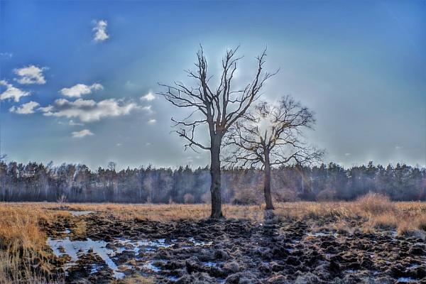 POLAND - Nature\'s Impressions No.15 by PentaxBro
