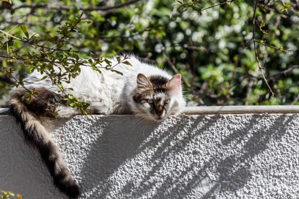 I cat you by Lakkou