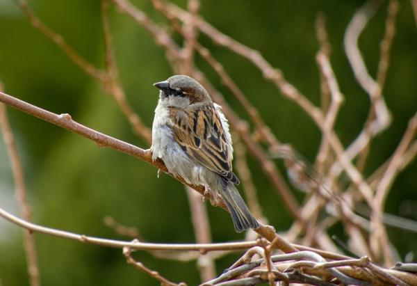 Bird by kamil018