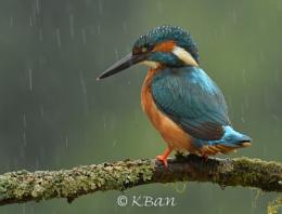 Rainy Day Fisher