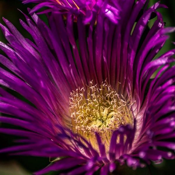 Wild Victorian Flower by RafSerrano