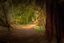 Fairytail Walk by mikeyham