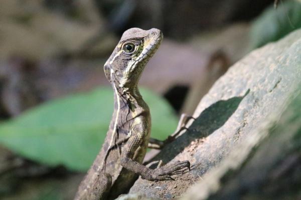 Lizard by agednovice