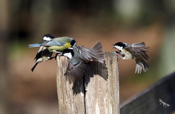 Birds Feeding by colinryan