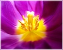 The Heart Of The Flower by Sylviwhalley