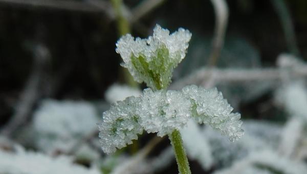 Frozen by SUE118